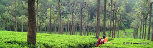 Attractions in Ooty